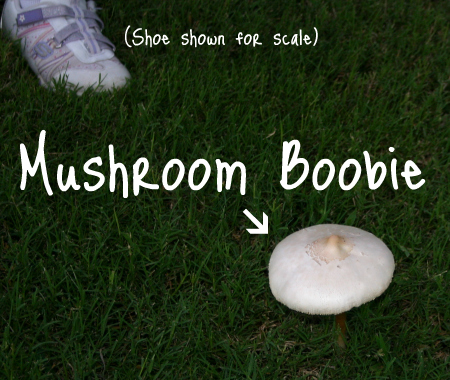 Probably the sexiest mushroom ever.