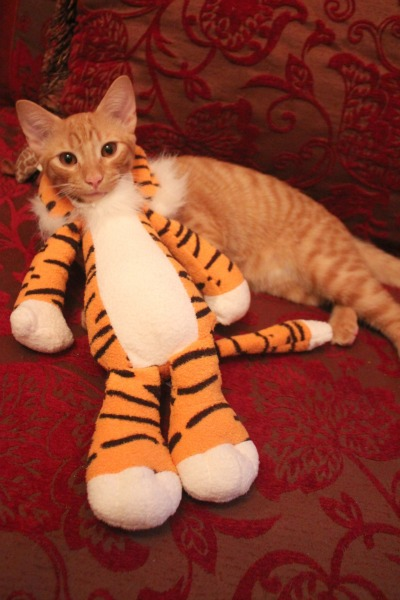 Do it yourself cat costume the bloggess hes actually fine with the costume solutioingenieria Image collections