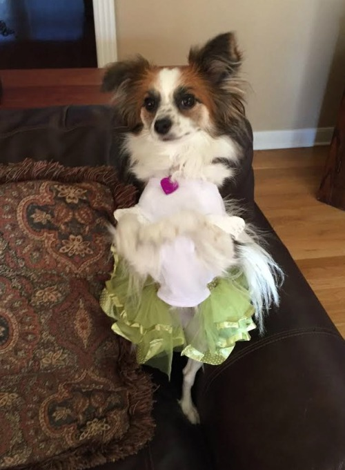 I was never think enough to be a ballerina, but this dog is nailing it.